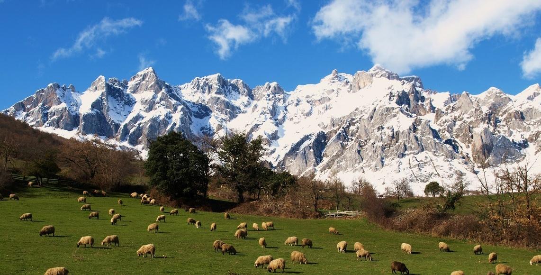 <p>Picos de Europa</p>